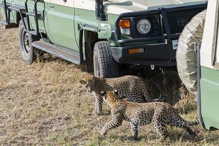 African Safari. Cars are not interesting at all!
