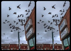 Spadina Avenue doves 3-D / CrossView / Stereoscopy / HDR / Raw (Stereotron) Tags: toronto to tdot hogtown thequeencity thebigsmoke torontonian streetphotography urban citylife birds doves north america canada province ontario crosseye crosseyed crossview xview cross eye pair freeview sidebyside sbs kreuzblick 3d 3dphoto 3dstereo 3rddimension spatial stereo stereo3d stereophoto stereophotography stereoscopic stereoscopy stereotron threedimensional stereoview stereophotomaker stereophotograph 3dpicture 3dglasses 3dimage twin canon eos 550d yongnuo radio transmitter remote control synchron kitlens 1855mm tonemapping hdr hdri raw