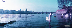 Purple Prague, Study 33 (1nspired.artist) Tags: horizon202 lomochrome purple lomochromepurple 35mm lomo prague praha inspiredartist art europe iso100 film epsonv500 panorama swan bridge