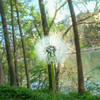 Dandy (MrTheEdge7) Tags: torino turin italy italia parcodelvalentino park trees tree dandelion stem