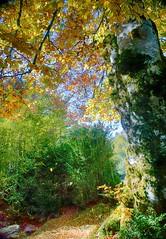 Selva de Oza (Huesca-Pirineos-España) (Carlos M. M.) Tags: selvadeoza hdr huesca aragón pirineos nature naturaleza sony sonyalpha6000 trees