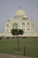 171104_059 (123_456) Tags: india agra uttar pradesh taj mahal shaj jahan yamuna mumtaz ustad ahmad lahauri mughal mausoleum