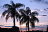 Florida Sunset (emilyrobynphotography) Tags: palm tree sunset florida sky golf nikon nikond5300 pink purple blue white black silhouette powerlines