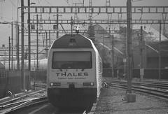 visp #15 (train_spotting) Tags: visp valais wallis sbbcffffs sbb re4600052 valdanniviers slm abb thales nikond7100