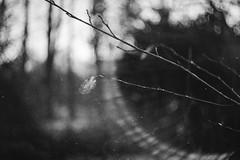 le mystère (l'imagerie poétique) Tags: limageriepoétique poeticimagery bokehonfilm hmbt helios402 85mmf15 ilforddelta400 believeinfilm flare filmisnotdead 35mm dust grainisgood
