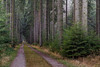 straight through (ralfkai41) Tags: bäume woodlands landscape landschaft nature forest wood trail trees outdoor weg wald natur path