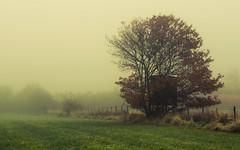 Eifel (Netsrak) Tags: baum bäume eifel europa europe herbst landschaft natur nebel wald autumn fall fog landscape mist nature woods