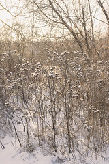 """Winter abstracts • <a style=""""font-size:0.8em;"""" href=""""http://www.flickr.com/photos/10545530@N06/39377810461/"""" target=""""_blank"""">View on Flickr</a>"""