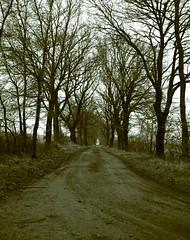 On the way to the next year (Rosenthal Photography) Tags: dezember color winter twiste bnw schwarzweiss anderlingen mamiya7 feldweg bäume 6x7 asa400 pflanzen weg mittelformat städte ilfordxp2 c41 landschaft rodinal125 ff120 20171206 analog bw dörfer siedlungen landscape way pathway track path trees nature rodinal mamiya 80mm ilford xp2 xp2super colorscan epson v800