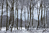 Snowfall (David Ball Landscape Photography) Tags: peakdistrict derbyshire landscape landscapes photography snow storm weather outdoors uk travel canon nature winter trees woodland wwwdavidballphotographycouk davidballlandscapephotography 2018