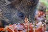 Autumnal Boar (Robin M Morrison) Tags: wild boar forestofdean