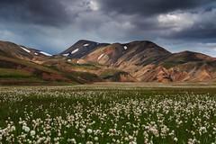 20170802-Canon EOS 6D-1666 (Bartek Rozanski) Tags: landmannalaugar sudurkjordaemi iceland fjallabak valley cotton grass mountains hills panorama icelandic