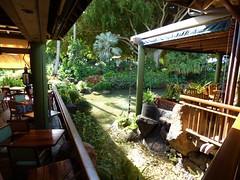 Wailua River State Park - Fern Grotto (57) (pensivelaw1) Tags: hawaii kauai wailuariverstatepark ferngrotto