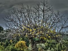 Sensitive to fears_IMG_6074n (AchillWandering) Tags: greece evia istiaia dream golden ciel blue naturephotography