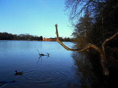 Rufford Park (kelvin mann) Tags: ruffordcountrypark rufford nottinghamshire notts water lake outdoors