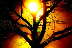 Backlight (petejam70) Tags: tree backlit nature urban surreal mysterious awesome vancouvercanada beauty