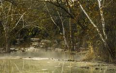 Fussy (keith_shuley) Tags: fall busy fussy water stream creek trees leaves bullcreek austin texas texashillcountry