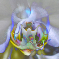 Orchid with a Difference (j.towbin ©) Tags: allrightsreserved© orchid doubleexposure manipulation photoshop layered macro macromondays flower
