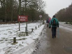 UK - Hertfordshire - Near Little Gaddesden - Walking down Monument Drive on Ashridge Estate in the snow (JulesFoto) Tags: uk england hertfordshire ramblers capitalwalkers littlegaddesden walking snow ashridgeestate monumentdrive