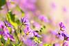 Summertime (mclcbooks) Tags: flower flowers floral denverbotanicgardens colorado summer