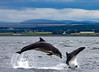 Chanonry Point 26 July 2016-0175 copy.jpg (JamesPDeans.co.uk) Tags: dolphins chanonrypoint mammals highlands gb greatbritain prints for sale unitedkingdom fortrose digital downloads licence scotland britain blackisle nature wwwjamespdeanscouk whales man who has everything bottlenoseddolphins landscapeforwalls europe uk james p deans photography digitaldownloadsforlicence jamespdeansphotography printsforsale forthemanwhohaseverything