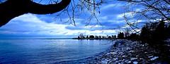 COLD AFTERNOON, ACA PHOTO (alexanderrmarkovic) Tags: acaphoto landscapelakeontario toronot canada scarborough blufferspark toronto