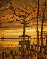 Golden hour light, tree love. (clking61) Tags: goldenhour lightdawn reflections tree sunrise northcarolina camdennc sky orange rust pier cyprustree elizabethcitync landscape riverscape pasquotankriver obx pentaxk1