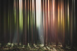 Rainbow Forest - HSS - 7/365