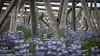 Iceland_Flora-1-3 (Lothar Heller) Tags: lotharheller flora iceland island islandia pflanze