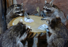 Coons at Cards (arbyreed) Tags: arbyreed cute funny crazy weird coons card cardgame poker fanciful quirky saloon bar grill ironhorsesaloon kanabutah raccoonsplayingcards absurd
