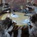 Coons+at+Cards