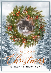Navidad 2017 (Focussed Photography) Tags: christmas happy cat barcelona spain nikon colour card