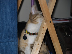 private 016 (lorablong) Tags: westhollywood california cat pet twix