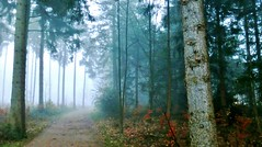 Secrets of the forest (farmspeedracer) Tags: forest tree morning november germany 2016 fog mist autumn fall herbst path secret woods