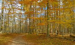 Autumn Woods (Larry the Biker) Tags: trees woods estate park autumn fall fallcolors foliage foilage november trails stonycreekmetropark sheldenestate oaklandtownship michigan