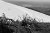 Branches glacées (ZUHMHA) Tags: bulgarie bulgaria hiver winter buzludja ice glace neige snow plant paysage landscape horizon monochrome