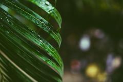 Still life (criatvt) Tags: leaf green stilllife plant rain india mumbai monsoon fade moody gloomy