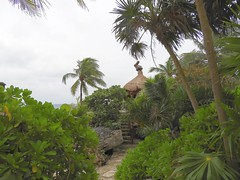 Mexico (Cancun, Xcaret Nature Park) One way to paradise (ustung) Tags: nature tree palm landscape paradice naturepark xcaret cancun mexico
