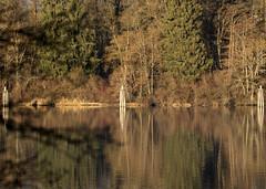 Maple Ridge Side of Fraser River_5381 (Mike Head - Jetwashphotos) Tags: mapleridge fraserriver afternoon lateafternoon winter sun lowsun bc britishcolumbia canada westerncanada westernregion
