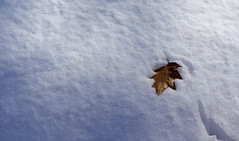 The texture of snow (Violet aka vbd) Tags: pentax k3 vbd hdpentaxda35mmf28macrolimited ct connecticut snow newengland oakleaf leaf trumbull leaves handheld manualfocus winter2017 minimalist 2017
