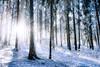 Merry Xmas (azhukau) Tags: forest nature tree winter snow landscape woodland outdoors season frost coldtemperature scenics nonurbanscene beautyinnature sunlight blue weather white branch morning