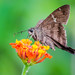 Butterfly perched on a colorful flower in a summer morning
