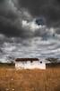 Casebre Sertao_9812 (Luciano_Alves_Foto) Tags: green seco sertão chuva nuvens cinza solidão solitária solitário árvore mato bege ocre casebre casa abandono abandonada casaabandonada nuvemcinza tempestade