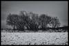 (ErrorByPixel) Tags: pentaxart handheld errorbypixel pentaxk5 k5 pentax 5018 bnw bw white black monochrome winter trees smc pentaxda 50mm f18 smcpentaxda50mmf18 snow tree sky landscape