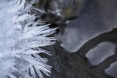 cristaux de glace (Samuel Pettina) Tags: glace ice cristaux rivière eau