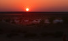 Sunset at The Thar Desert. India (Betty C.H.) Tags: camelsafari camels holidays india jaisalmer rajasthan samsanddunes thardesert travel vacation