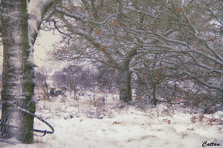 snow blitz - Gentleshaw, England