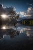 Tree of Life (Mark Boadey) Tags: wales snowdonia sunrise tree reflection reflections water lone llynpadarn mountain