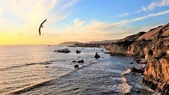 California morning (moonjazz) Tags: california morning photography birds excellent coast west landscape pacificocean peaceful beautiful geology pismobeach canon wide soar fly above cliffs travel best sunny day visit amazing bucketlist highway1 101 favorite place nature joy view vista moonjazz