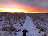 St. Croix Prairie Winter Sunset Hike - New Richmond, Wisconsin (Tony Webster) Tags: cortana december newrichmond saintcroixprairie stcroixprairie uswetlandsmanagementoffice wisconsin dog hike hiking snow sunset winter unitedstates us